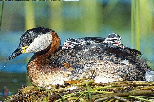 Naturschutz – Regeln für Paddler - © Lukasz Lukasik